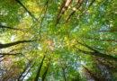 Nieuwe coalitie in Lennik in teken van duurzaamheid